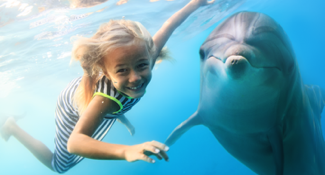 Dolphin Swim Tours
