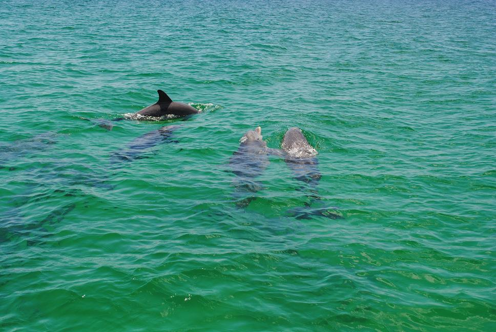 Dolphin World Panama City Beach Florida