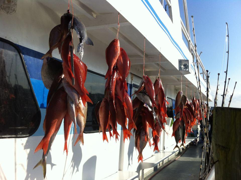 Deep sea party boat fishing in panama city beach 10 hour for Deep sea fishing maryland