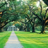 Laura & Oak Alley Plantation Combo Admission with Guided Tour