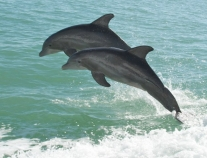 Caribe Cruiser Dolphin Tours Orange Beach