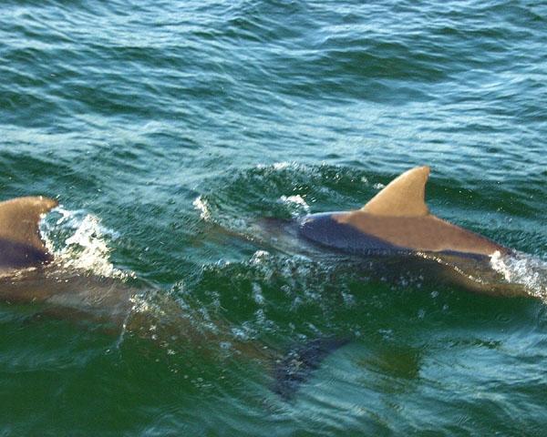 Best Dolphin Tour Gulf Shores