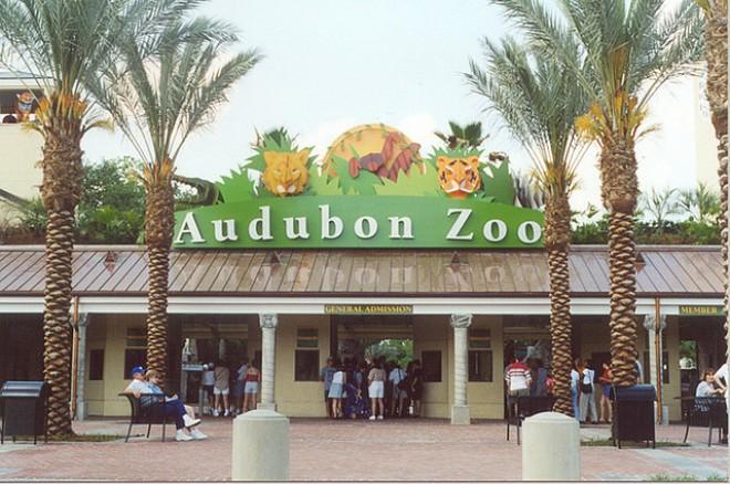 Audubon Zoo!