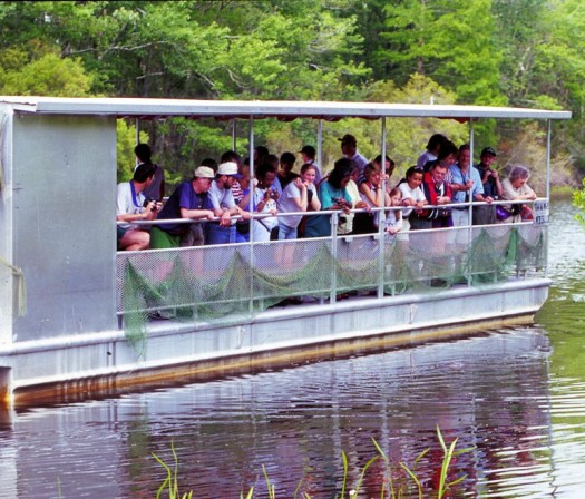 Swamp Tour!