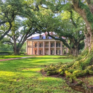 Plantation Brunch & Swamp Experience From New Orleans By Grayline Tours