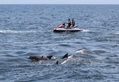 Myrtle Beach Jet Ski Eco Tour & Dolphin Encounter