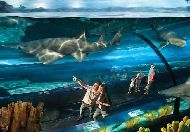 Aquarium Of Myrtle Beach