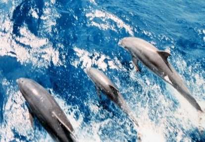 Dolphin Watch & Sightseeing Cruise by Ship Island Excursions