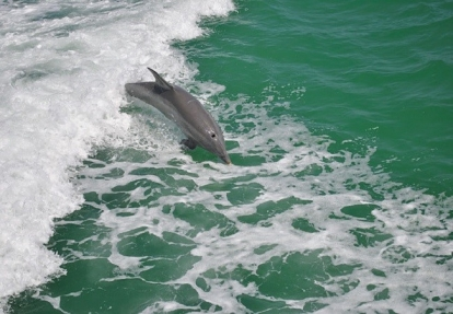 Dolphin Exploration Cruise with The Tropics Boat Tours