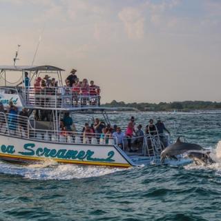 Dolphin Sightseeing Cruise Aboard The Sea Screamer 2