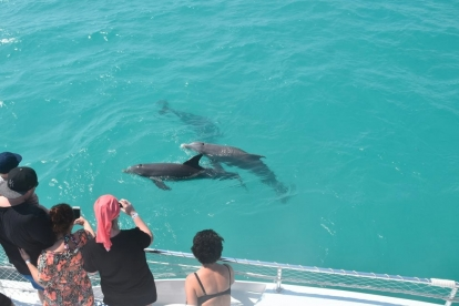 Combo Dolphin and Snorkel Cruise by Sunset Watersports