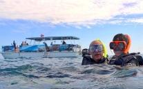 Seabreeze Dolphin & Snorkel Tour