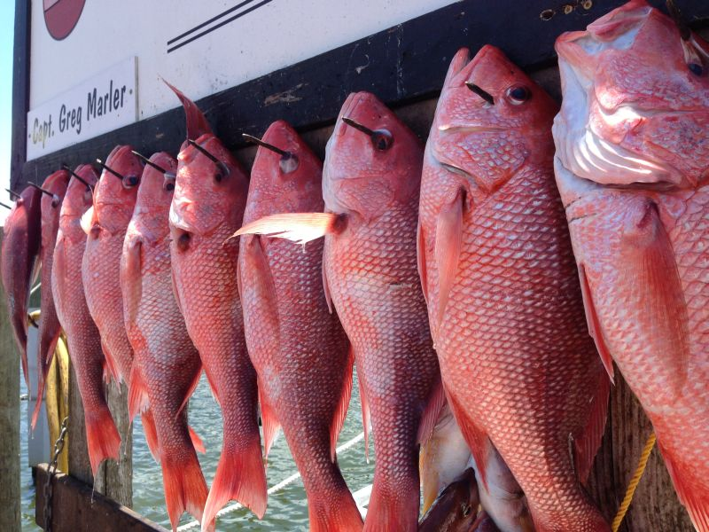 Rack filled with snapper.