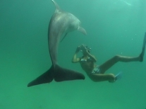 4 Hour Shell Island Dolphin Swim Experience With Water Planet USA