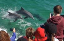 Pensacola Beach Dolphin Cruise